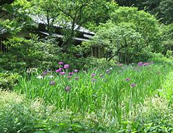 東慶寺のあじさい